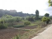 Bruticia riu Ripoll (3)