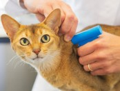 Microchip implant for cat by Veterinarian