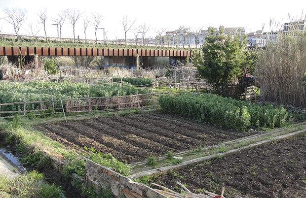 Horts al riu Ripoll (4)