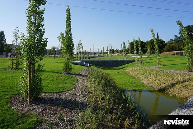 Zona humida Parc Pinetons (11)