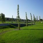 Zona humida Parc Pinetons (12)