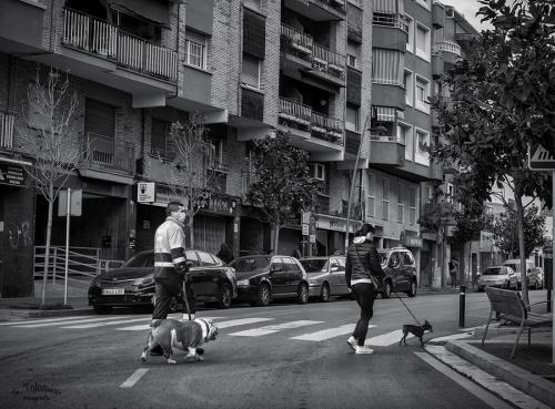 Passejant el gos